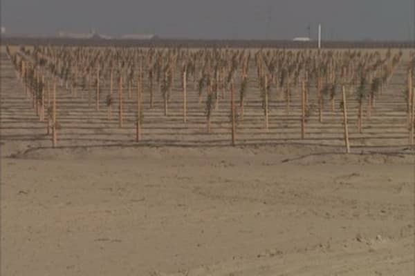 California growers flooding farms