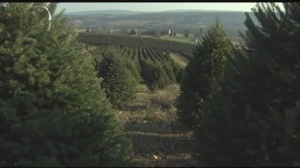 Short supply of Christmas trees