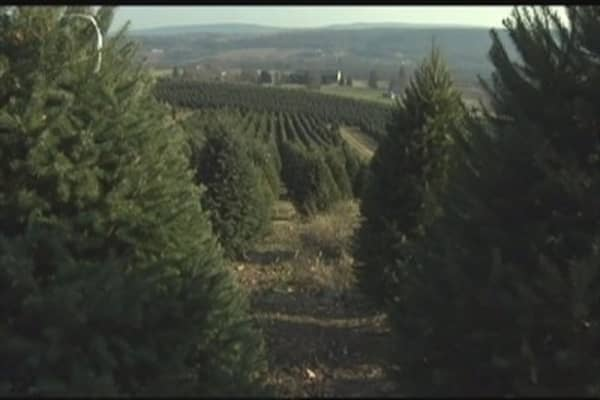 Short supply of Christmas trees