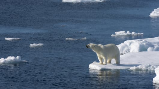 A polar bear is looking for food at the edge of the pack ice north of Svalbard, Norway.