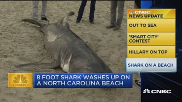 CNBC update: 8 foot shark washes up on beach