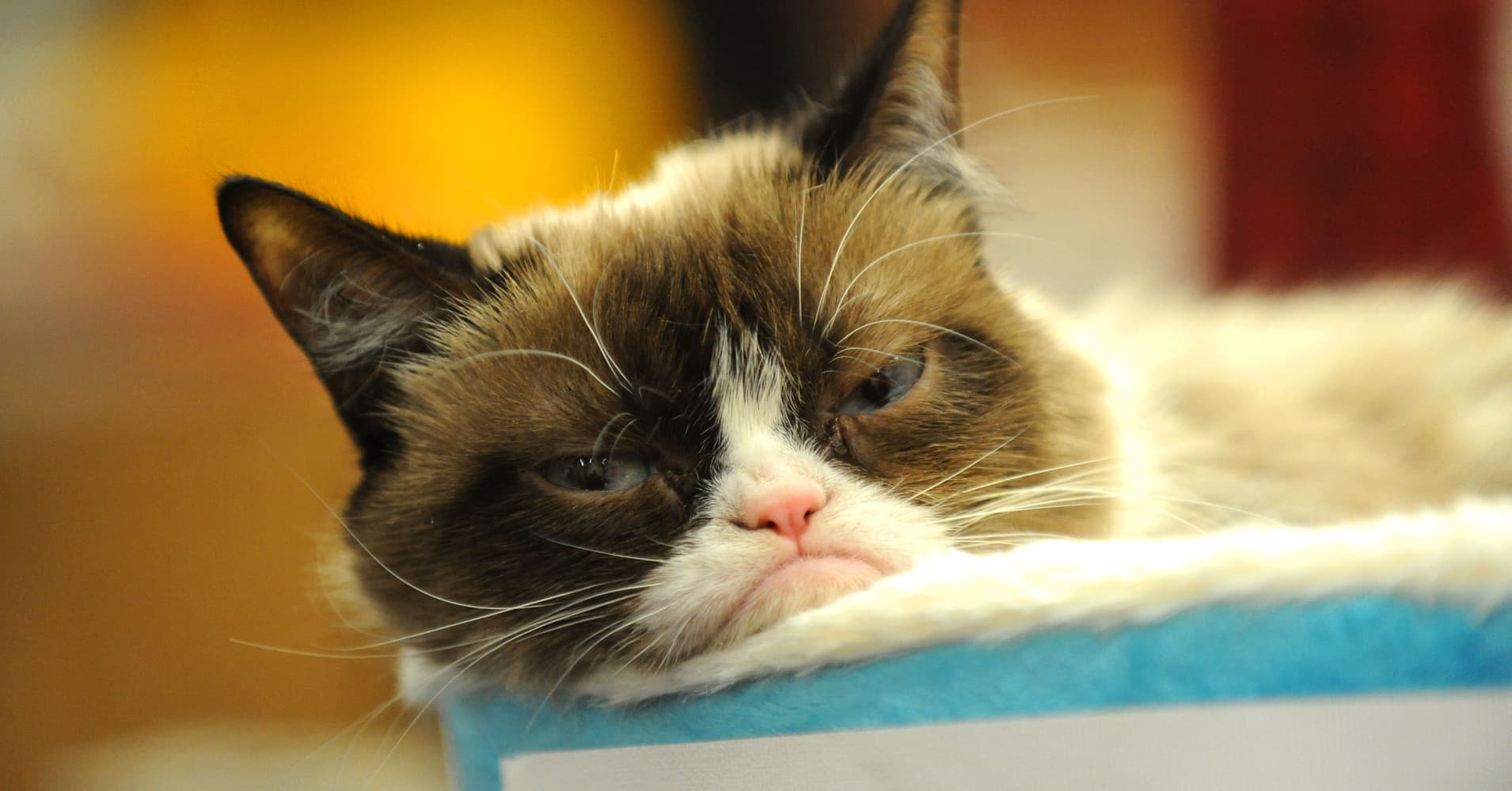 Image of: Movie Grumpy Cat Bbccom Grumpy Cat Won Lawsuit Plus Other Viral Stars Making Big Money