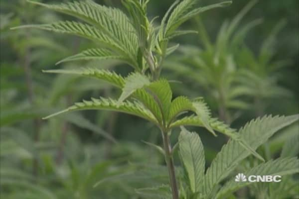 New York's medicinal marijuana companies ready to open