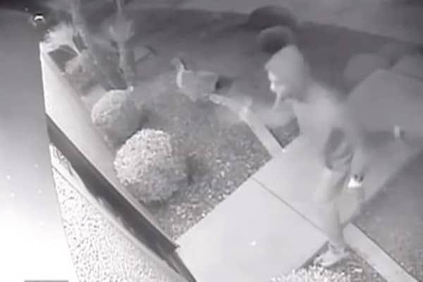 Mexican restaurant security footage goes viral