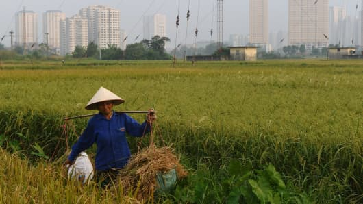 A farmer harvests rice on a field next to residential buildings on the outskirts of Hanoi