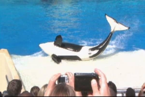 SeaWorld is suing California