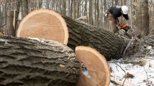 A lumberjack cuts logs that have been harvested at an NJB Logging LLC site in Chesterland, Ohio.
