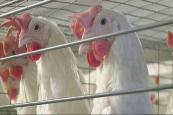 US government draws up emergency bird flu plan