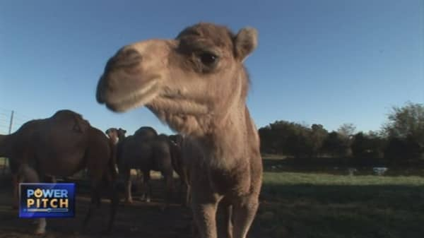 Start-up milks a camel for all its worth