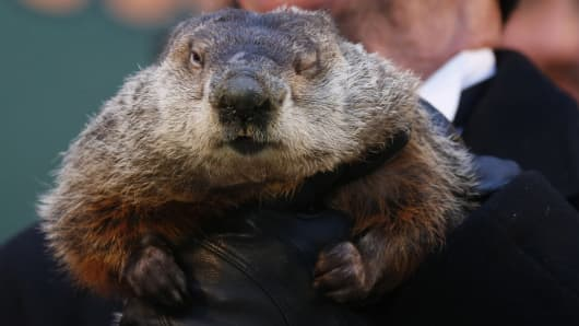 Famed weather prognosticating groundhog Punxsutawney Phil. An early spring was predicted as Phil did not see his shadow.