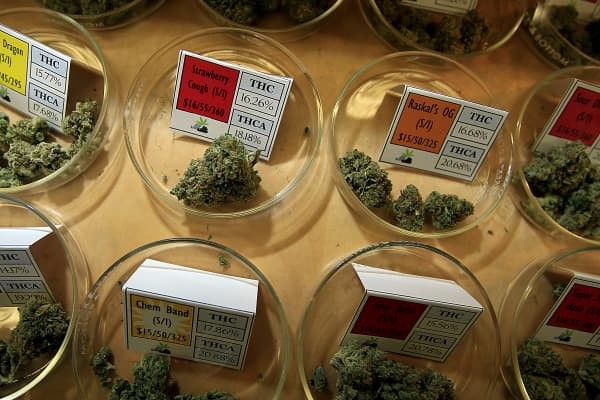 Different varieties and strains of marijuana are available for patients at Harborside Health Center, a large medical marijuana dispensary in Oakland.