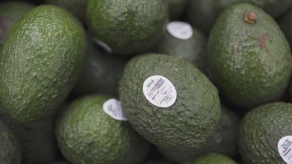 Avocado prices soar in Australia