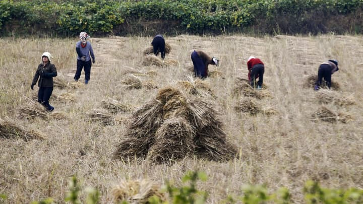 People work in a field just outside Pyongyang, North Korea October 8, 2015.