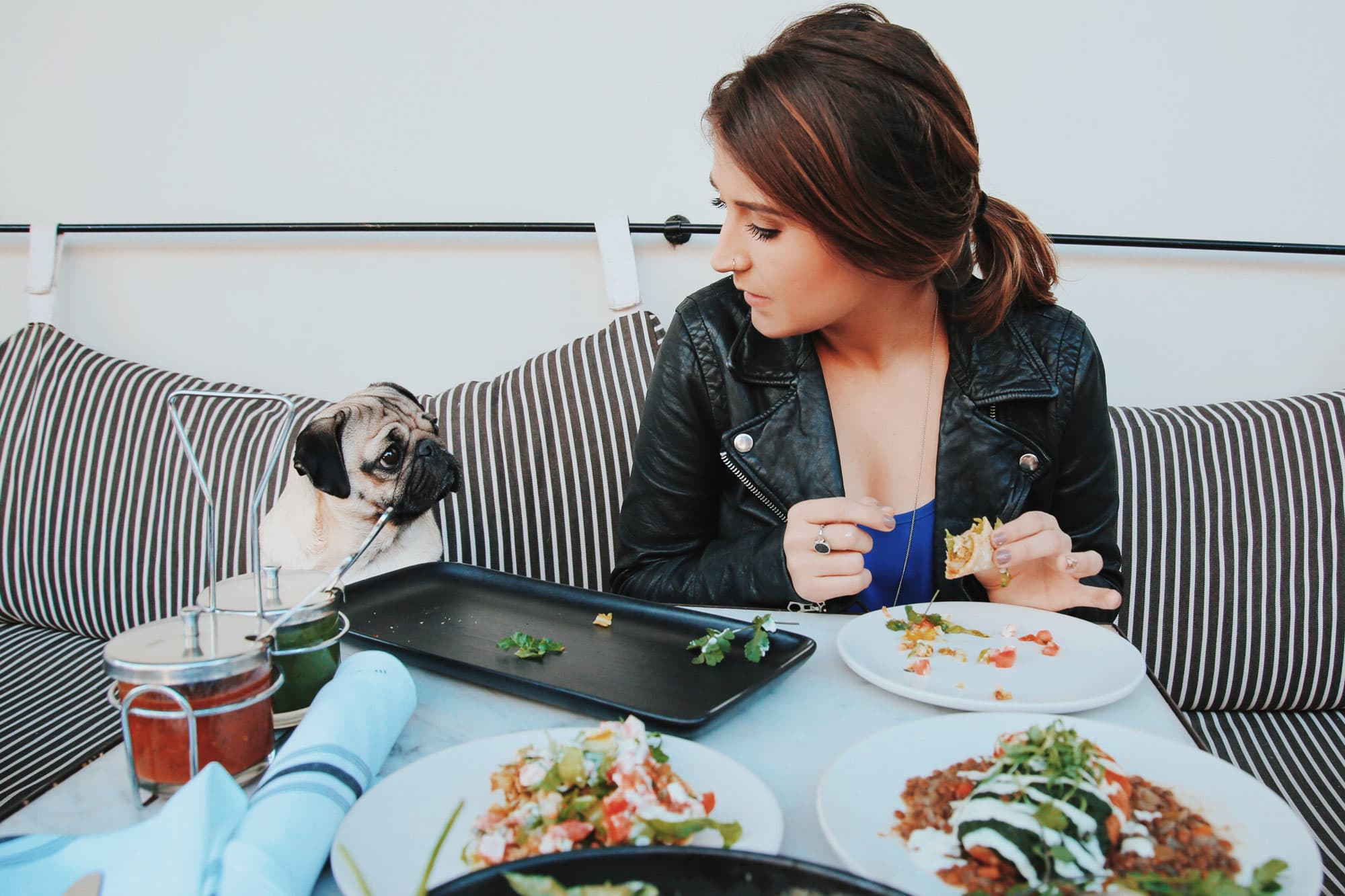 how to make your pet instagram famous from doug the pugs owner