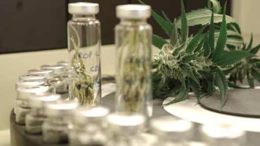 GW Pharmaceuticals cannabis laboratory