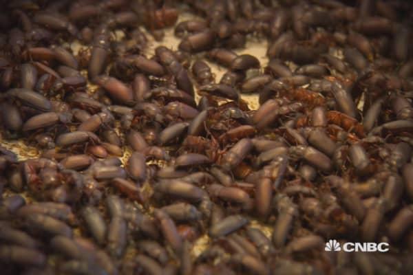 Insects: Food of the future?