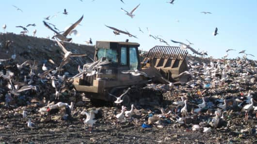 European storks used to be a totally migratory species, but some have begun to settle year-round in landfills in Spain and Portugal.