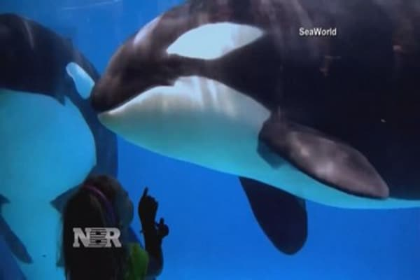 Sea World to Phase out Killer Whale Shows