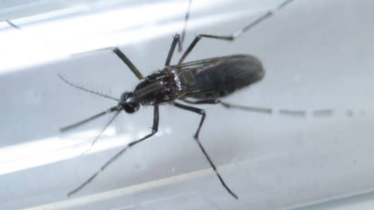 An aedes aegypti mosquitoe is seen inside a test tube as part of a research on preventing the spread of the Zika virus and other mosquito-borne diseases at a control and prevention center in Guadalupe, neighbouring Monterrey, Mexico, March 8, 2016.