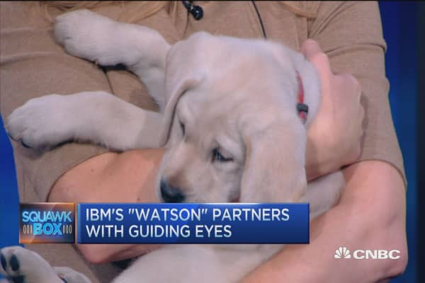 IBM's 'Watson' lends Guiding Eyes a paw