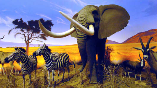 Mounted African animals sit against a mural in the African diorama section of a Cabela's store in Wheeling, W.Va.