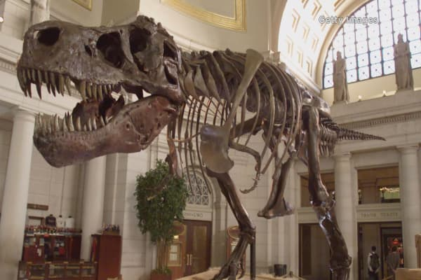 New evidence reveals what really killed dinosaurs