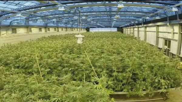 'Pot stock' flying high this year
