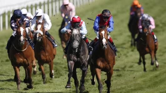 Horse racing, top contenders, race