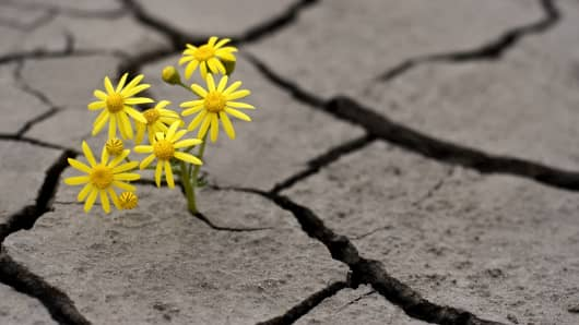 Life in extreme conditions, flower growing from nothing