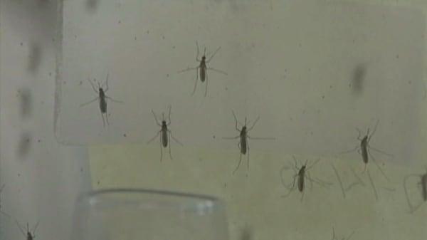 Zika virus test gets US approval