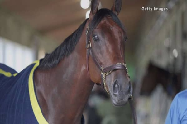 American Pharoah living the good life in retirement