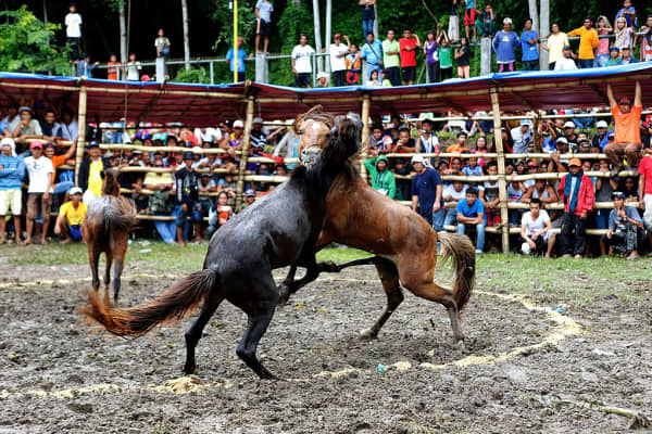 Villagers watch a horse fight in November 2015 in the southern Philippine town of Lake Sebu in South Cotabato. Horse fights have been banned since 1998 but are still held by many Mindanao communities.
