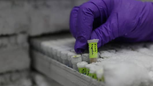 A technician picks up a sample of frozen DNA from Ficus hispida fig tree at the Jodrell Science laboratory at Kew Gardens where staff work on the extraction of plant DNA in south-west London on May 9, 2016.