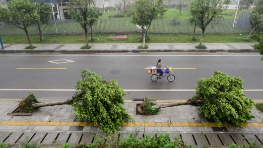 Trees in China, toppled over
