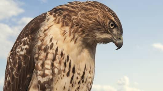 Hawks eyes fixed, Hawk