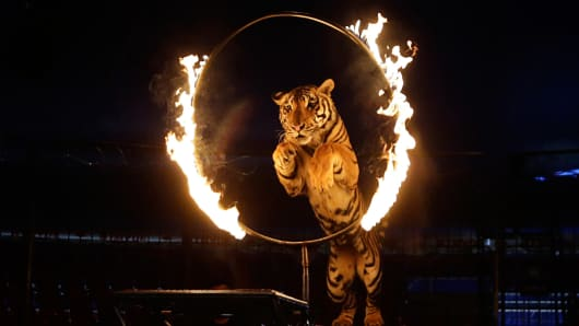 A tiger jumps through a ring of fire during a show at the Atayde Hermanos Circus in Mexico City August 8, 2014.