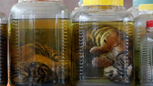 Tiger cub carcasses are seen in jars containing liquid as officials continue moving living tigers from the controversial Tiger Temple in the Kanchanaburi province, west of Bangkok, Thailand June 3, 2016.