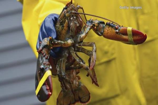 Maine fight back at EU proposal to ban American lobster imports