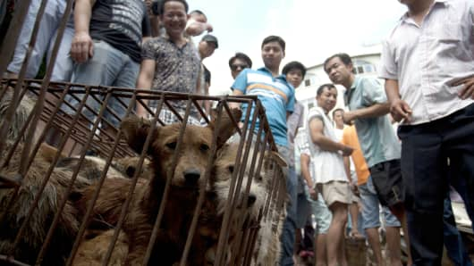 Caged dogs wait to be sold in a market on June 21, 2015, in Yulin. Some 10,000 dogs are slaughtered for the festival, an annual event that was launched in 2009 to celebrate the summer solstice.