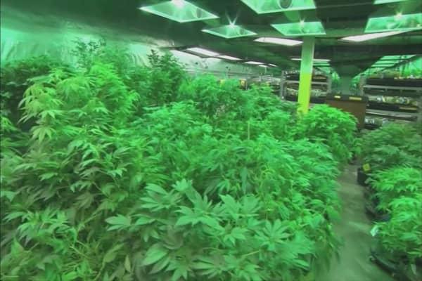 Microsoft strikes its first-ever marijuana partnership