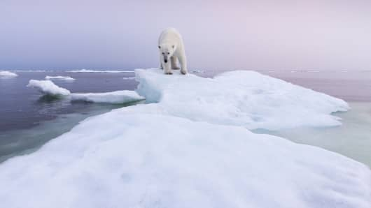Polar bear, climate change