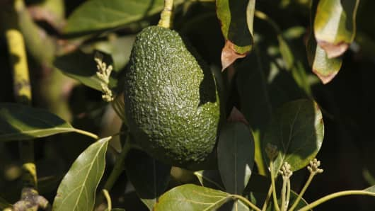 An avocado hangs from a tree at a farm in Pauma Valley on March 5, 2014 near Valley Center, California.