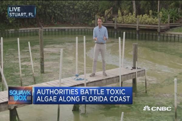 Toxic algae outbreak