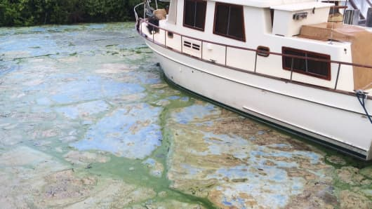 Algae covered water at Stuart's Central Marine boat docks on Thursday, June 30, 2016, in Stuart, Fla.
