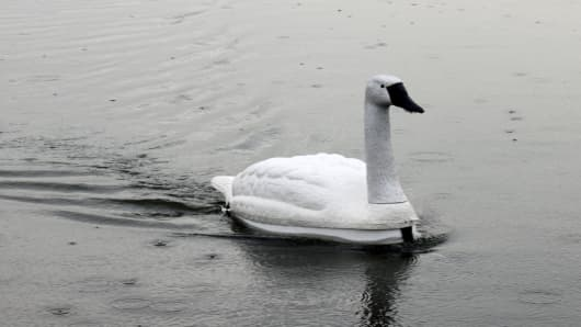 NUSwan, a robotic swan developed to monitor water quality