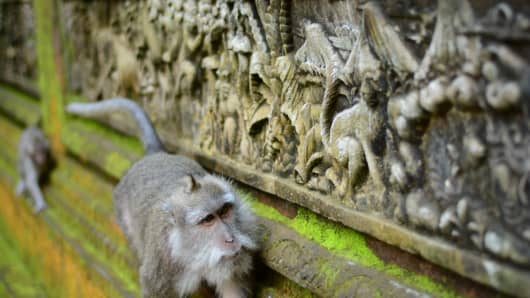 The Sacred Monkey Forest Sanctuary in Bali, Indonesia