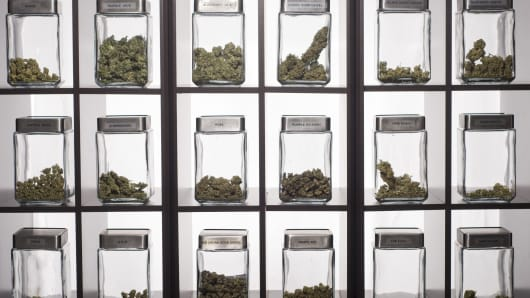 Medical grade marijuana display at dispensary in Denver, Colorado.