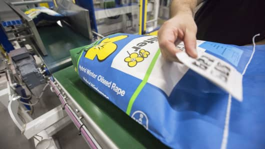 An employee places an identification label on a sack of Hybrid Winter Oilseed Rape at the Bayer CropScience processing facility, operated by Bayer AG, in Monheim, Germany, June 17, 2016.