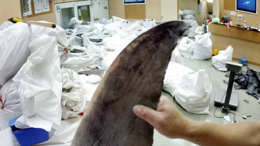 A wholesale shark fin salesman on Hong Kong displays a fin in August 2006. China is the world's biggest consumer of the food product, which is commonly used to make shark's fin soup.