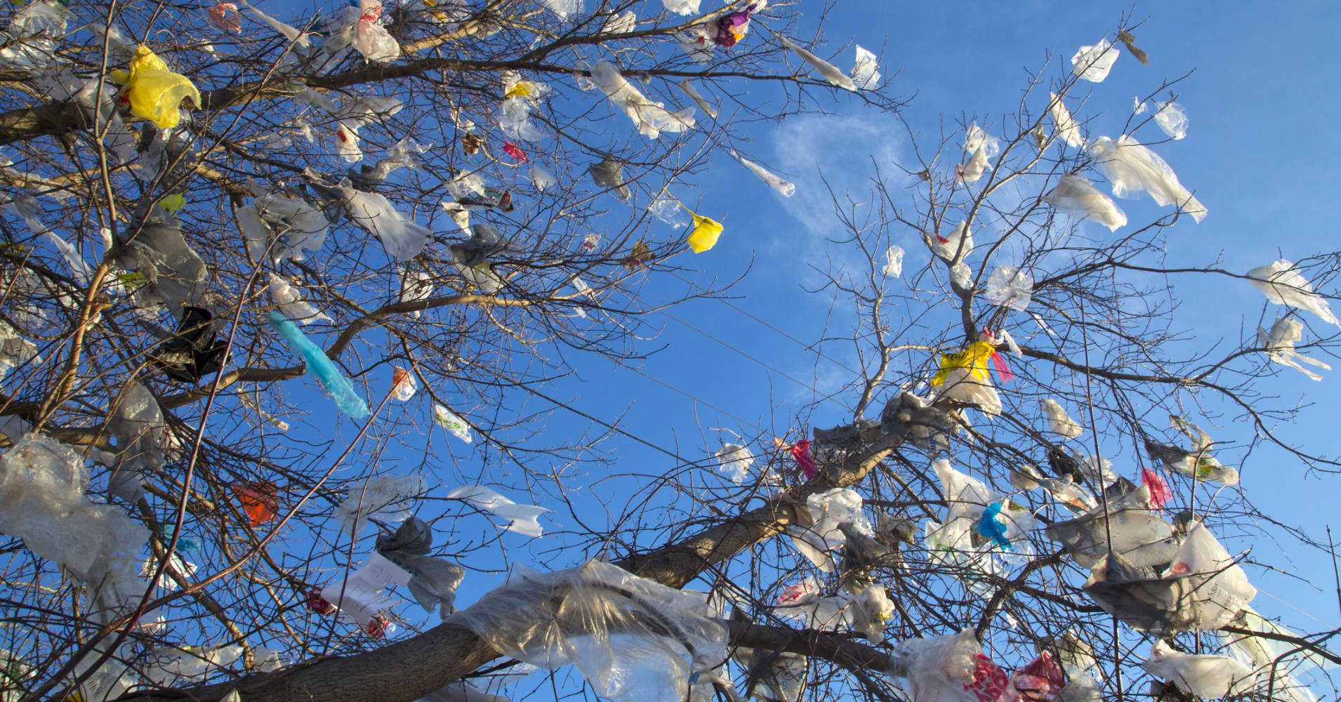 after the charge on plastic grocery bags�could coffee cups